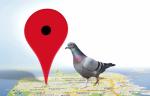 Google-Pigeon-Update-400x257
